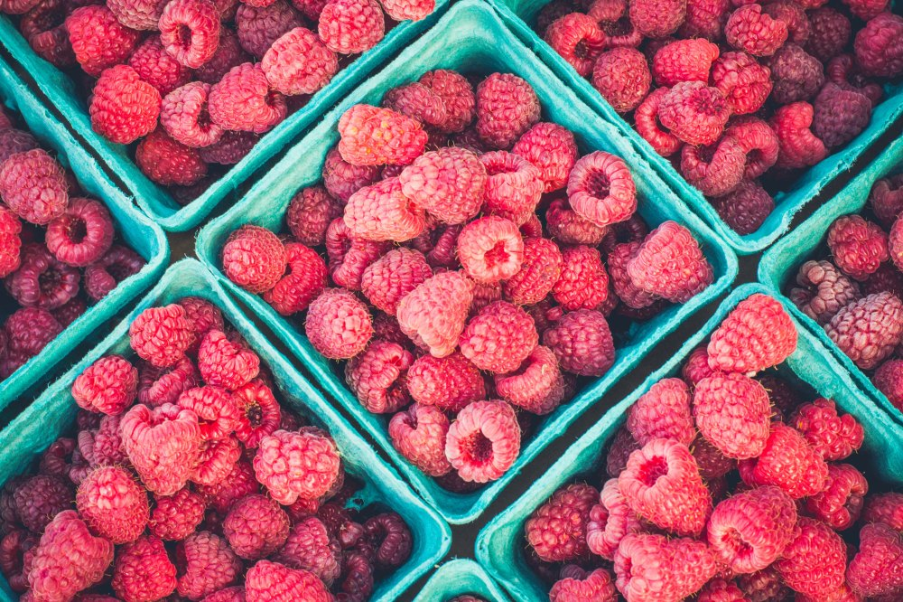 Vera talks about raspberries in The Oldest Profession by Paula Vogel